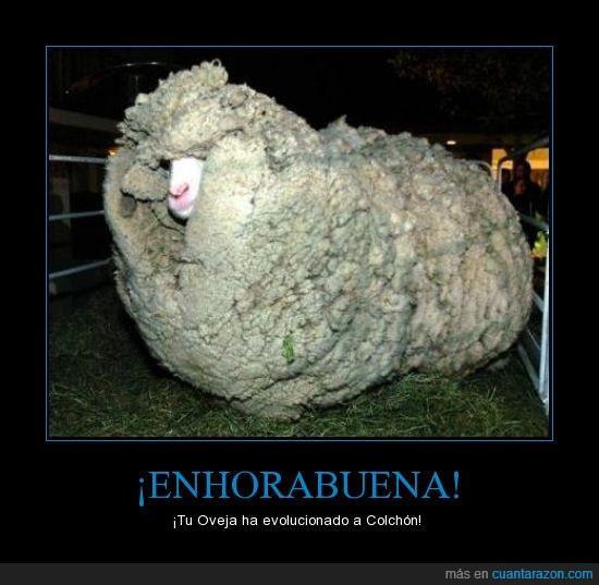 colchon,esquilar,evolucion,lana,oveja,pokemon