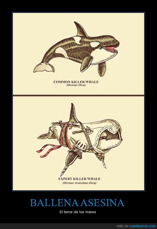 asesino,assassins creed,ballena,cuchillos,orca