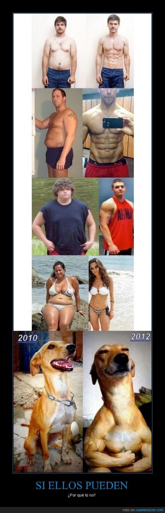 adelgazar,cambio,fuerte,gimnasio,musculos,perro,peso