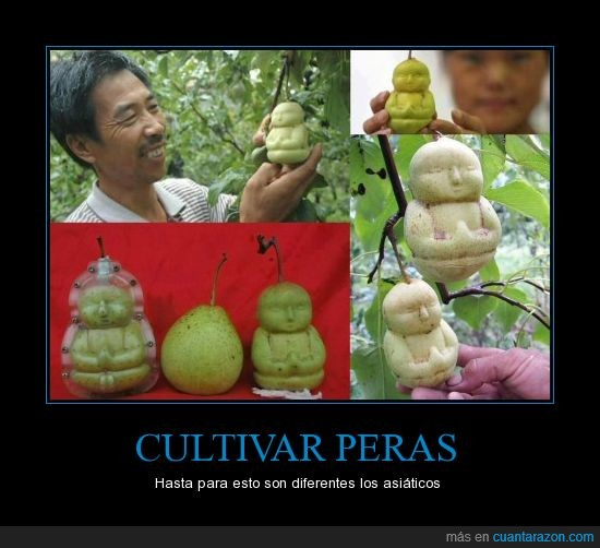 asia,Asiáticos,buda,chino,comida,Peras,persona,sentada,shiddharta