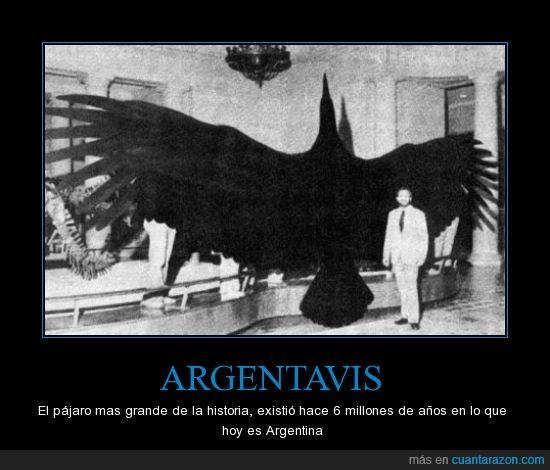 argentavis,cuervo,negrop,pajaro enorme,pajarraco