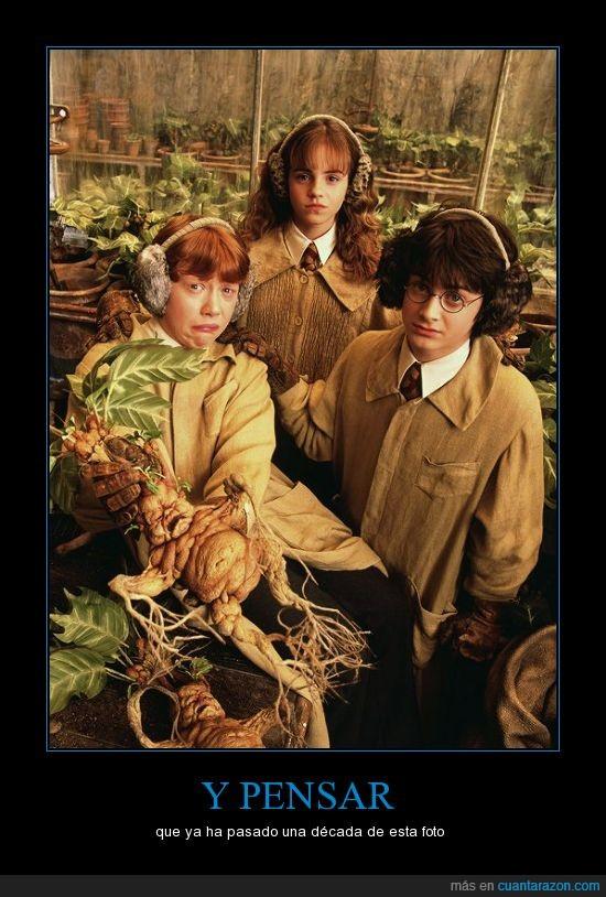 como pasa el tiempo,harry potter,Harry Potter y la cámara secreta