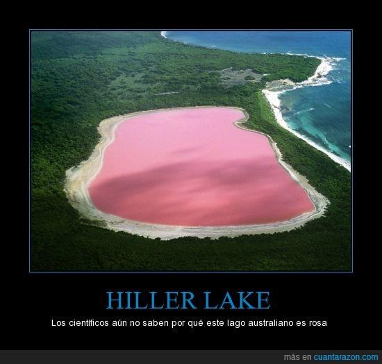 australia,curiosidad,hiller lake,lago,rosa