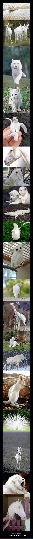 albinos,animales,blancos,lechoso,mundo animal