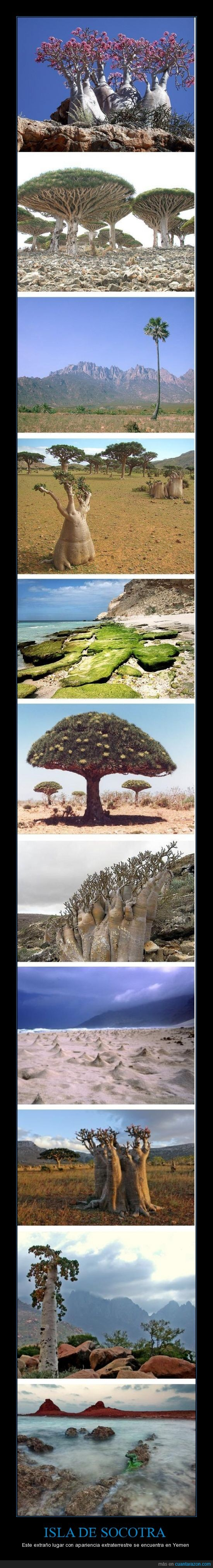 extraterrestre,isla extraña,raro,socotra,yemen
