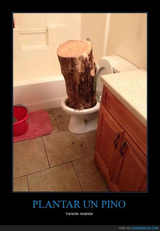 madera,pinocho estuvo aquí,tronco,vater