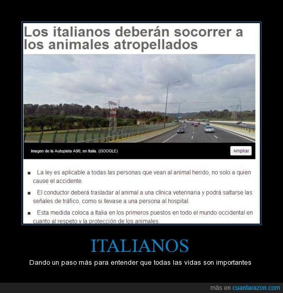 animales,italia,proteccion,socorrer,vida