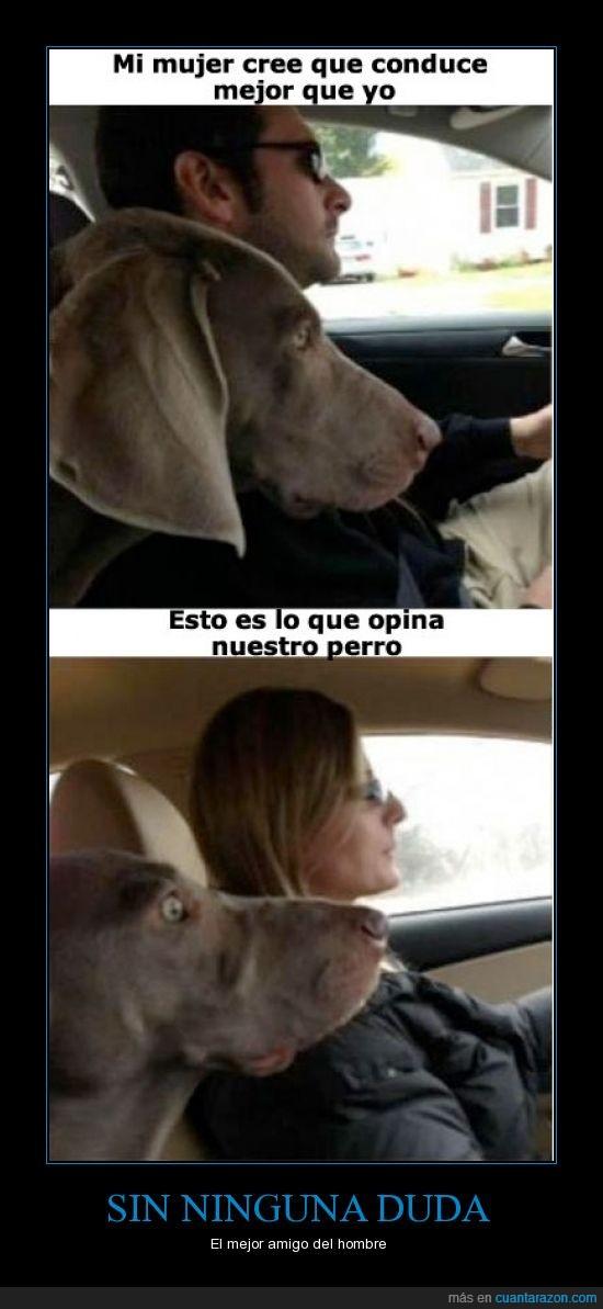 cara,conducir,enfadaros con el perro no conmigo,feminazis,hombre,miedo,mujer,perro