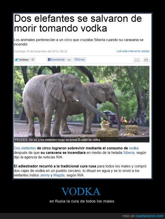 circo,elefantes toman vodka,elefantes vodka,Jenny,magda,rusia,Siberia