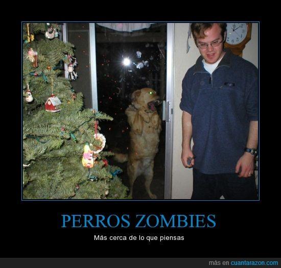 apocalipsis,arbol,mascotas,navidad,perros,zombie