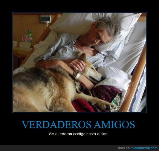 cáncer,indigente,mascota,perro