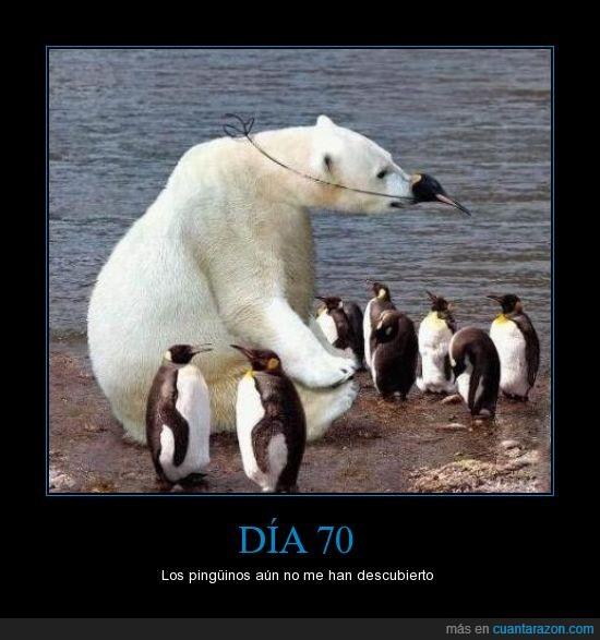 careta,infiltrado,mascara,oso,pingüinos