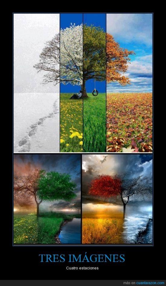 arbol,color,cuatro,estaciones,hoja,imagenes,Tres