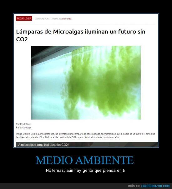 algas,ambiente,año,árbol,C02,lampara,medio,micro
