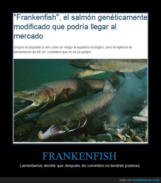 comer,genetica,pescado,pez,transgenico