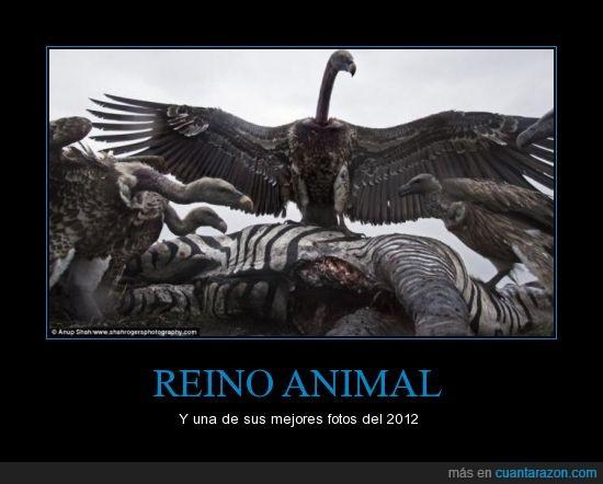 2012,cebra muerta,condor,reino animal