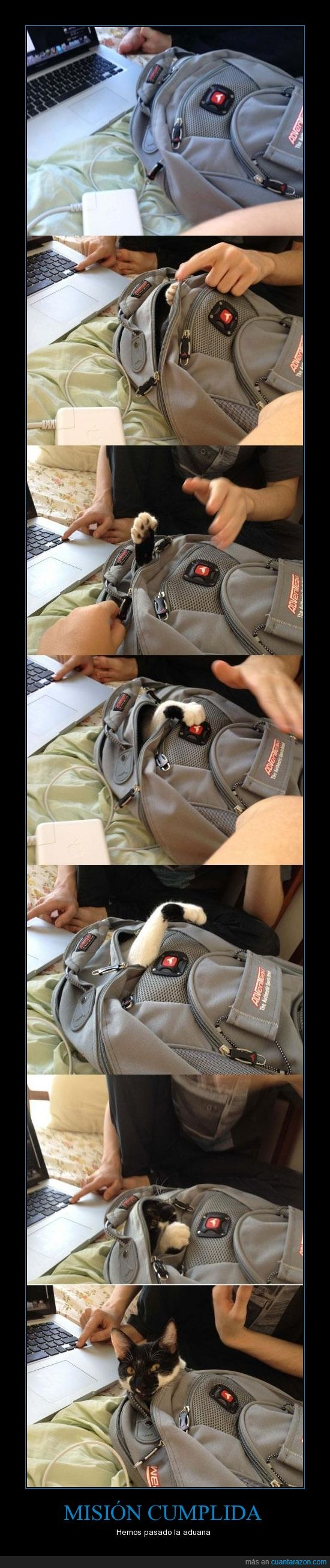 contrabando,esconder,gato,mochila,ninja,viaje