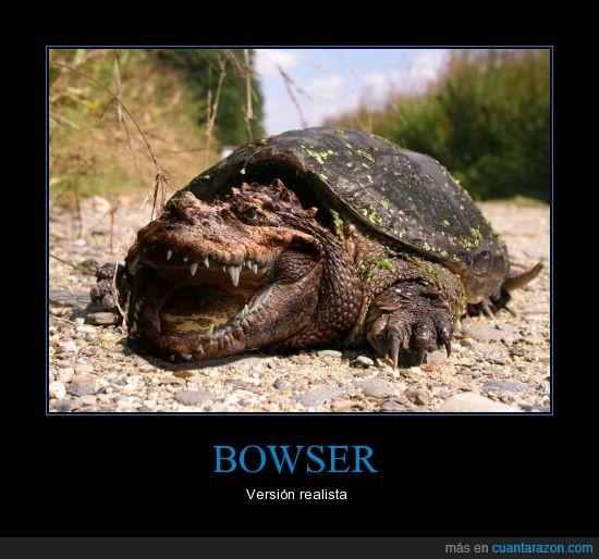 bowser,cocodrilo,cruce,mario,realista,tortuga,versión