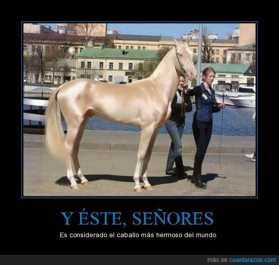 animal,caballo,considerado,hermoso,mundo