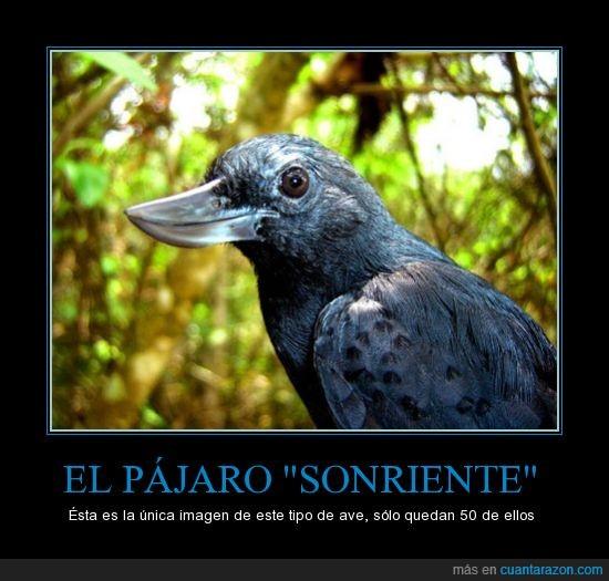 extincion,girado,pájaro,peligro,pico,reves,sonrisa