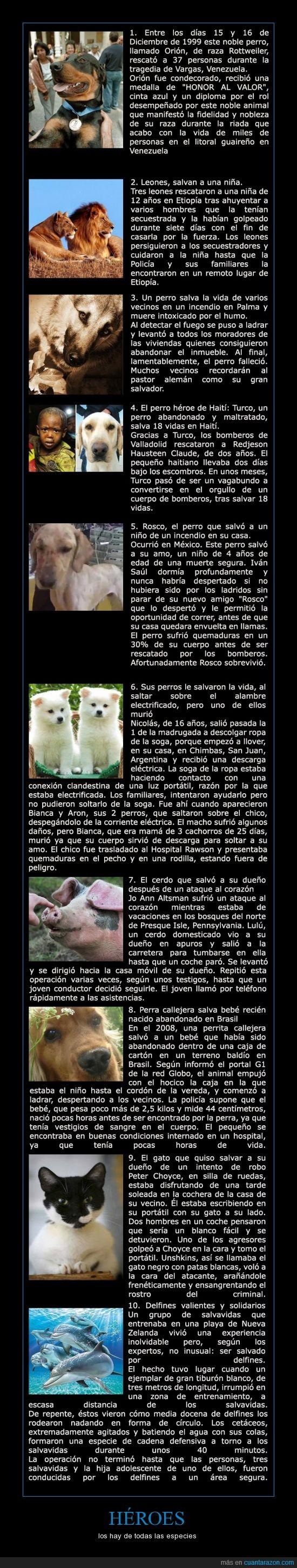 cerdo,delfin,gato,heroes,las lista continúa,perro,revisar la fuente,salvar vidas