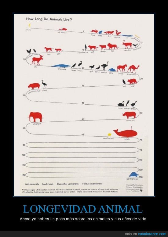 animal,animales,graficas,Longevidad,saber