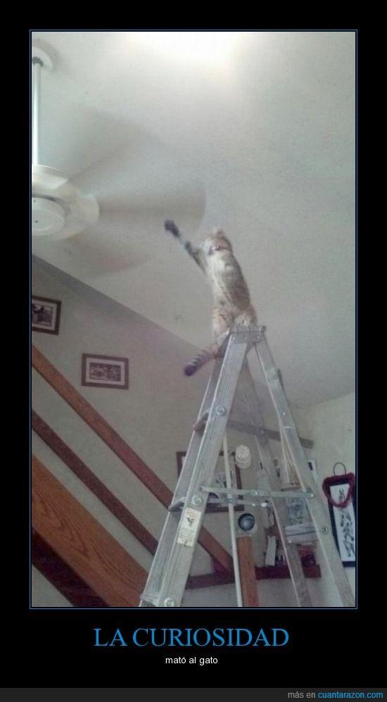 alonso26,escalera,gato,matar,ventilador