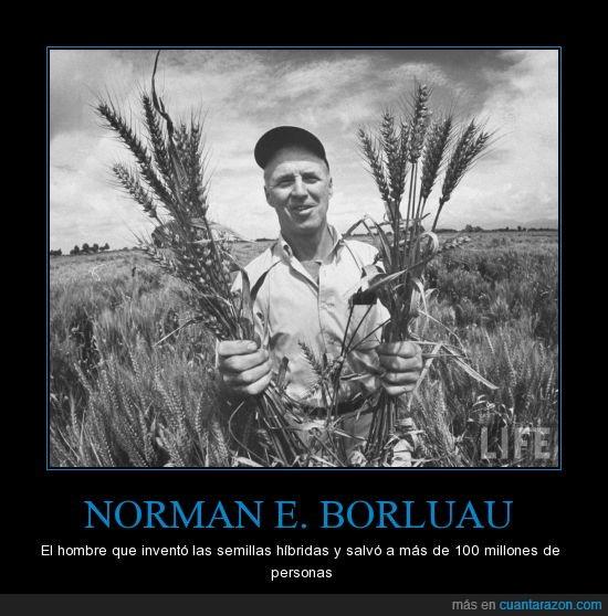 100 millones,borluag,hibridas,norman,semillas