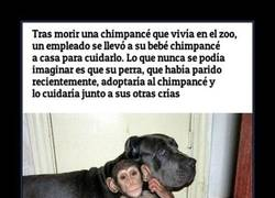 Enlace a MUNDO ANIMAL