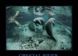 Enlace a CRYSTAL RIVER