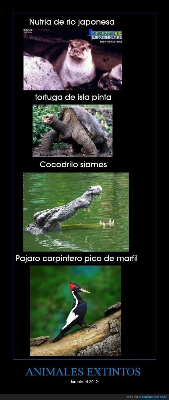 2012,animales,carpintero,extincion,extintos,muerto,pajaro,tortuga