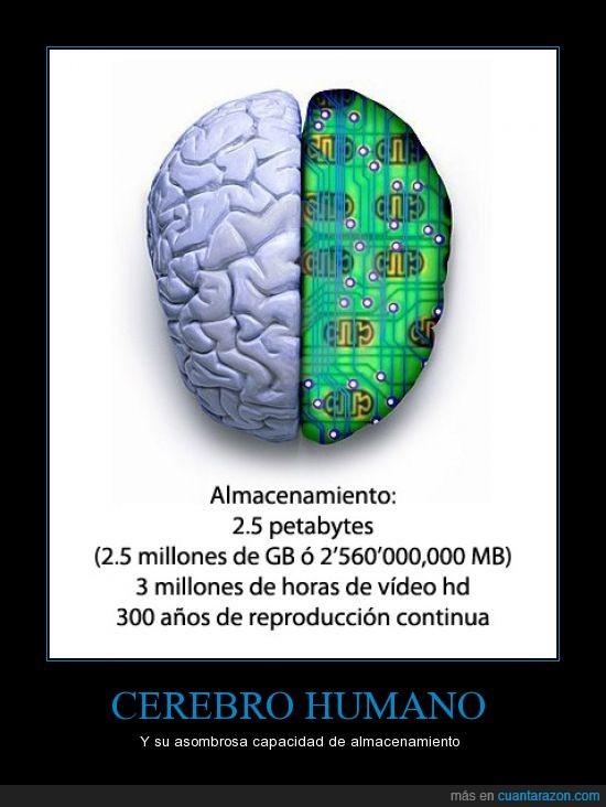 almacenamiento,cerebro,memoria,mi cerebro pide liberar espacio,petabyte