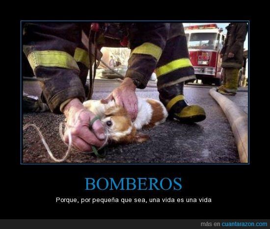 bombero,oxigeno,perrito,perro,salva