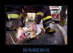 Enlace a BOMBEROS