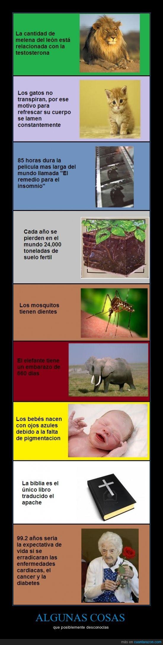 99.2 años,apache,bebés,biblia,dientes,elefantes,embarazo,expectativa de vida,fertil,insomnio,leones´testosterona,mosquitos,ojos azules,sabias que,suelo
