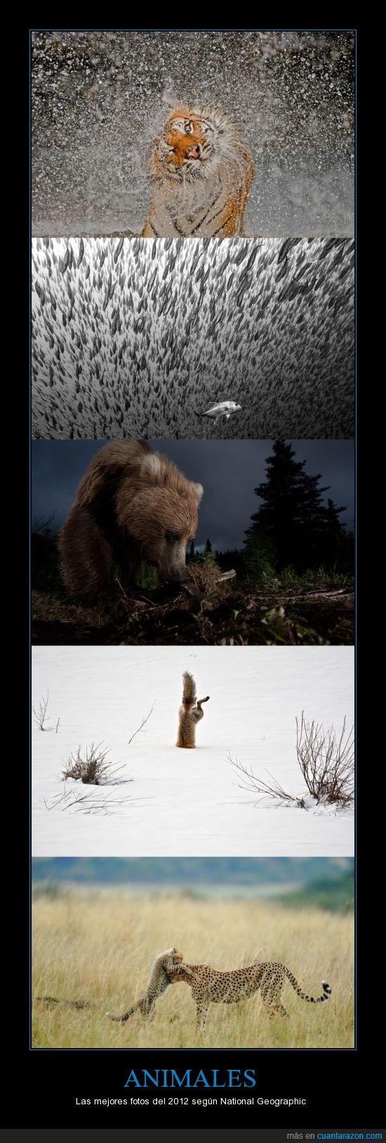 2012,animales,concurso,fotos,ganadores,mejores,national geographic