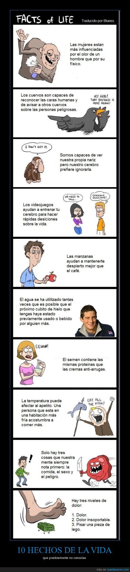 eat all the fish!,facts,hechos de la vida,tira cómica
