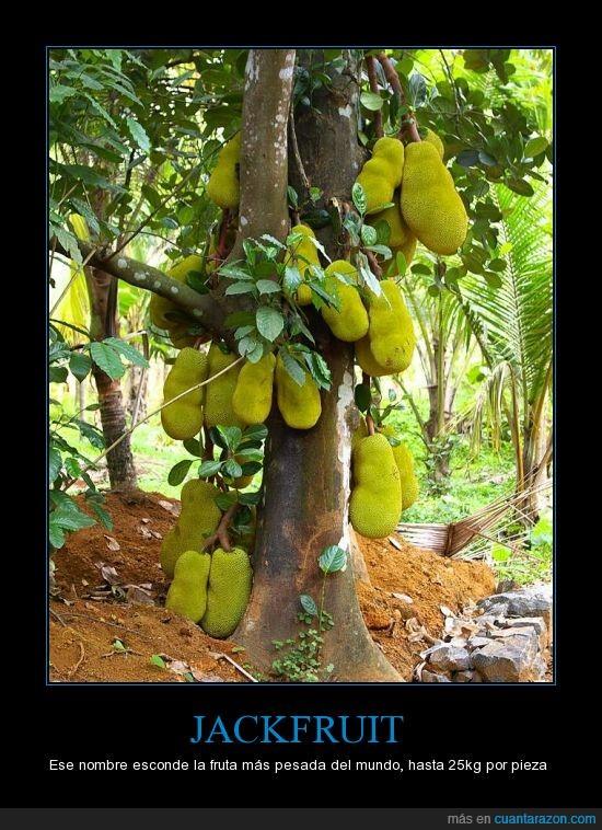 arbol,fruta,grande,jack fruit,pesada,verde