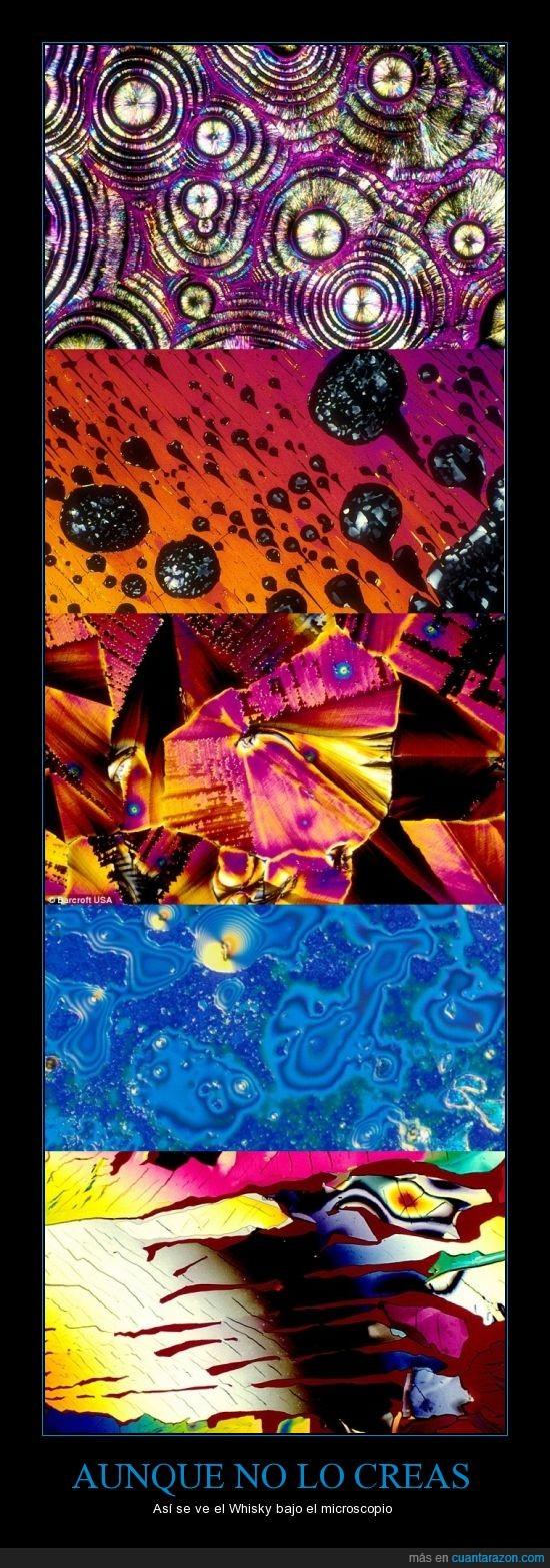 Whisky microscopio impresionante colores