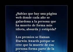 Enlace a DARWIN AWARDS