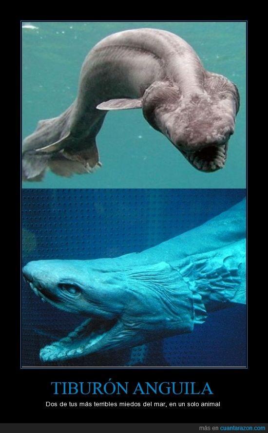 anguila,mar,miedos,tiburón,tiburón anguila
