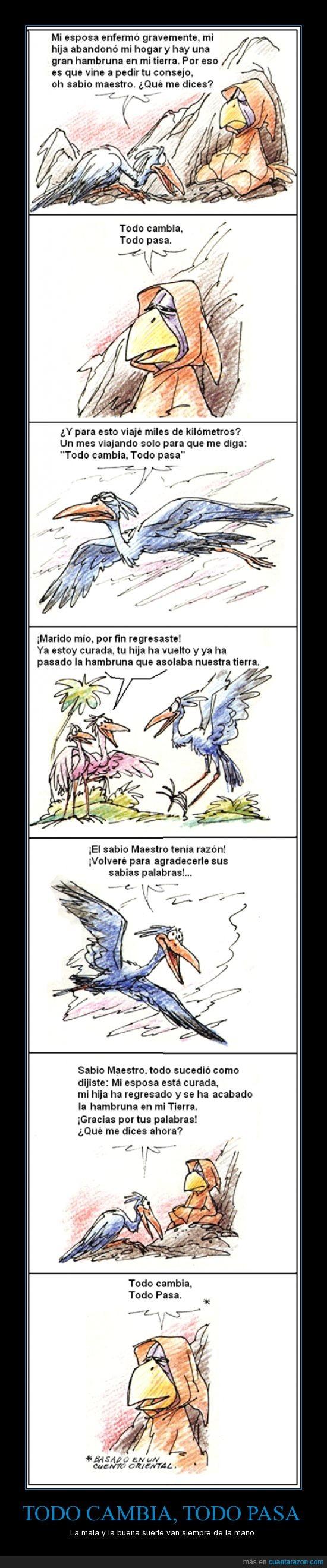 aves,maestro,sabiduria,suerte