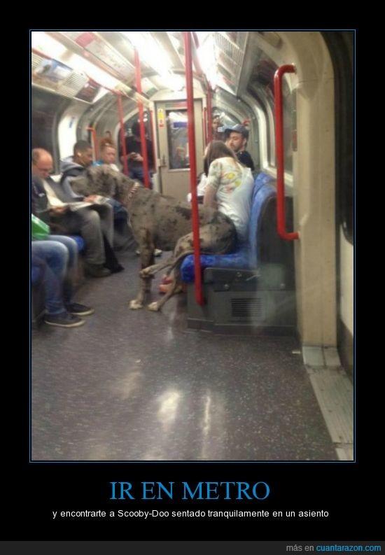 asiento,gran danes,metro,misterio,scooby,sentado,sentar,sentarse,silla,viajar