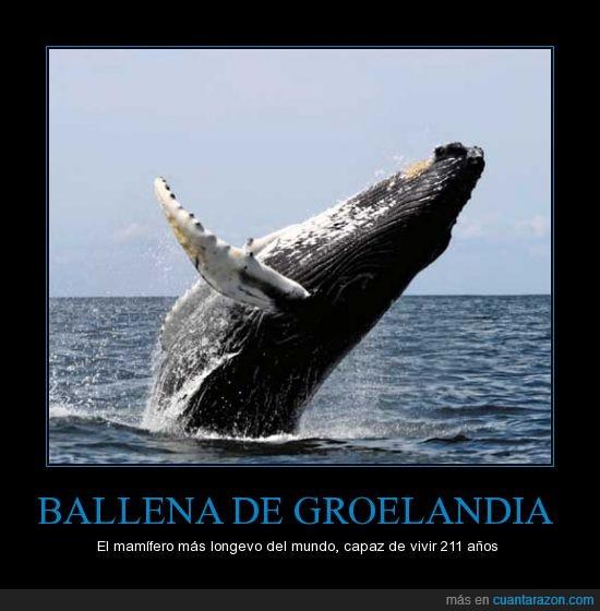 ballena,longevidad,naturaleza,océano