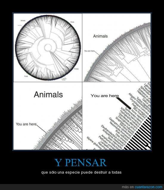 destruir,homo sapiens,humano,naturaleza,tierra,vida