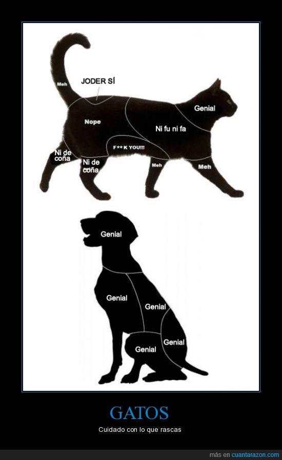 comodidad,gato,perro,rascar,rey,zona