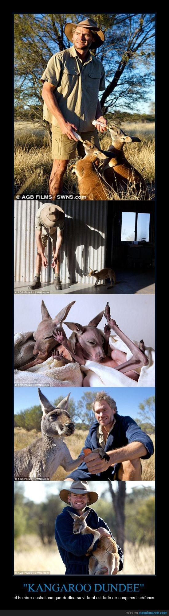 Australia,canguro,canguros,Chris Barnes,cuidar,huerfanos.,madre canguro