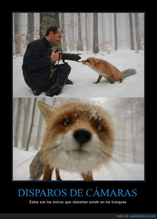 animal,buena,camara,darkanjunior,disparos,foto,hombre,lobo,zorro