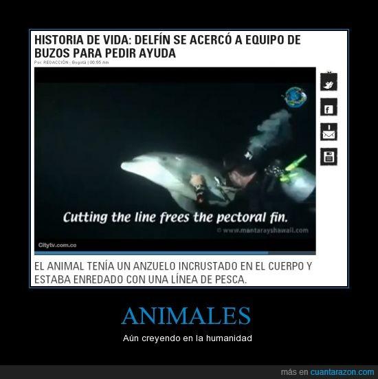 anzuelo,ayuda,delfín,humanidad