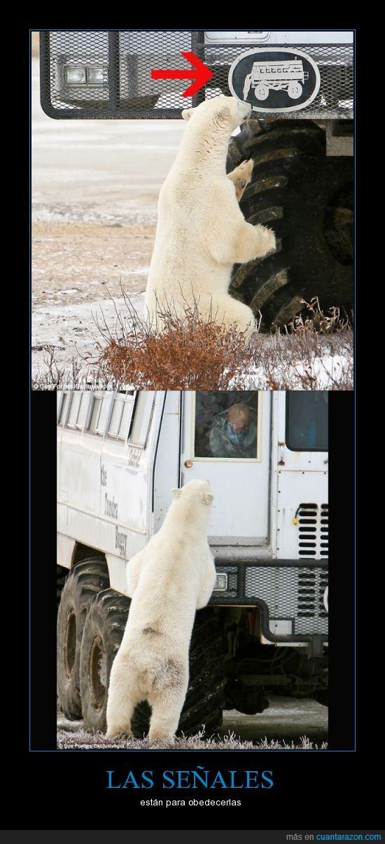 Auto,Canadá,imitar,oso polar,señal,Whitewolf